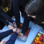 La sostenibilidad en la escuela