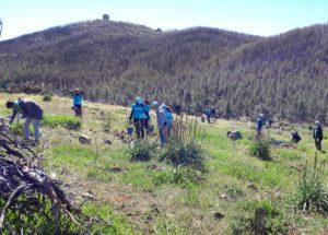 Reforestación Canarias 03